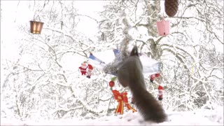Squirrel on Christmas umbrella - Video