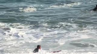 Man in black wet suit with red surf board - Video