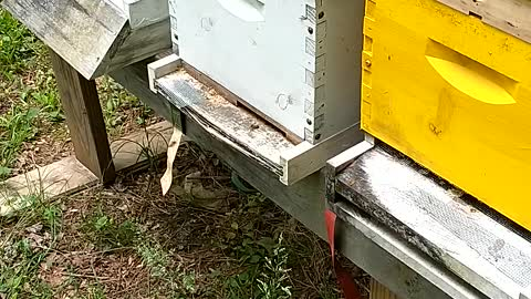 hive feeders and nucs for sale