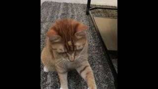 Best cats compilation and Cutest Ones - Video