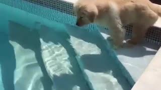Adorable cute dogy going for a swim