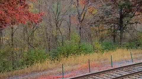Lehigh Valley Scenic Railway in Fall