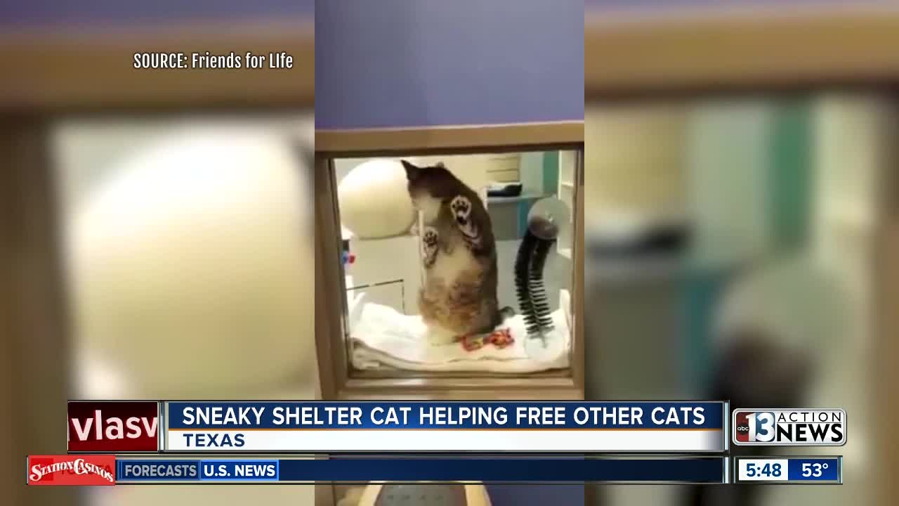Sneaky cat frees other cats