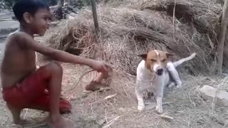 small village boy playing with dog  - Video