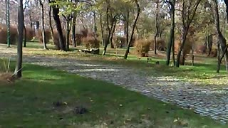 Autumn walk - Video