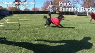 Coolwag Super Dog Bowl Starting Line Up featuring Pixie, Roxy and Sawyer