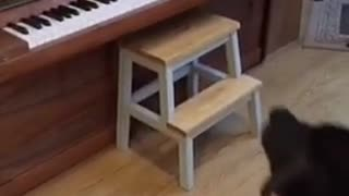 Black cat falls off back of piano - Video