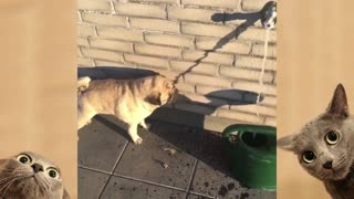 Funny DOGS videos compilation
