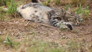 Beautiful Cat enjoying Nature - Video