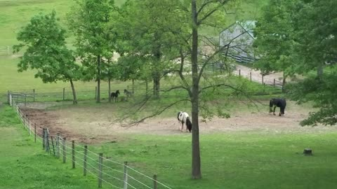 Adorable foals running and playing