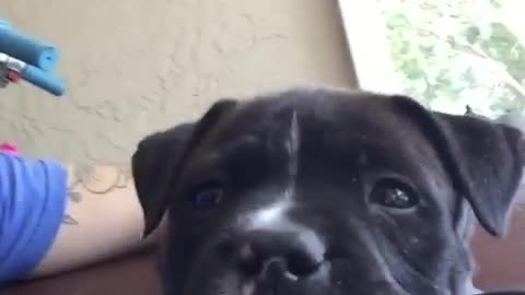 Close up of super cute puppy