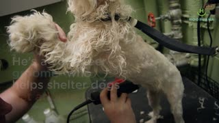 Dog Groomer Makes Shelter Dogs Beautiful Inside And Out! - Video