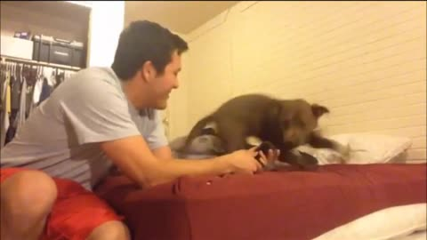 Pit Bull Has The Most Precious Reaction When She Meets Rescued Kitten For The First Time