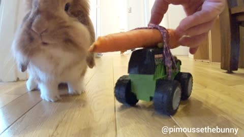 What's up doc ? a carrot on wheels