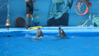 Performance of dolphins