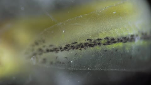 Becoming: From zygote to tadpole, in six stunning minutes