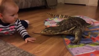 Baby Meets Komodo the Water Monitor Lizard - Video