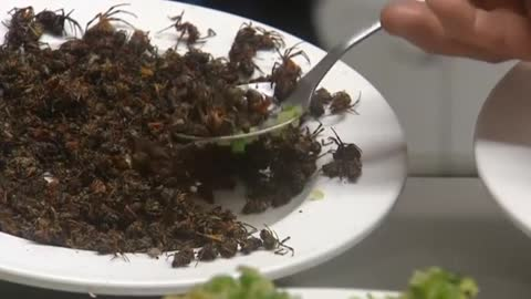 Mexico dishes up creepy crawly fare