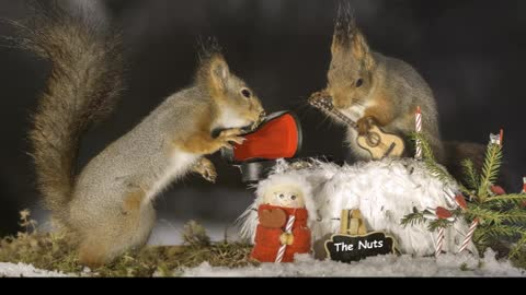 Incredible imagery of squirrels and music instruments