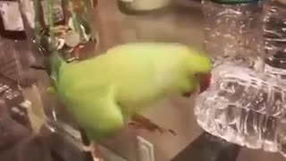 Get yourself a parrot, they said! Parrots are cute, they said!