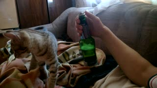 Kitty Bottle Opener