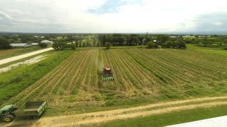 Birdseye view of harvesting timelapse - Video