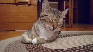 Kitten falls asleep - Video