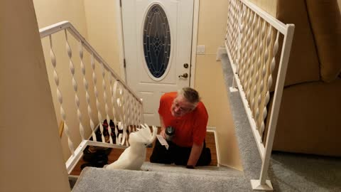 Parrot Waits For Dad To Cross The Doorstep And He Is So Excited
