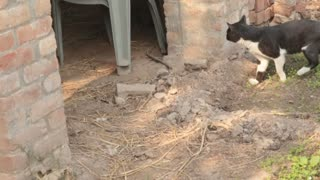 kitty watch some mouse and ran away  - Video