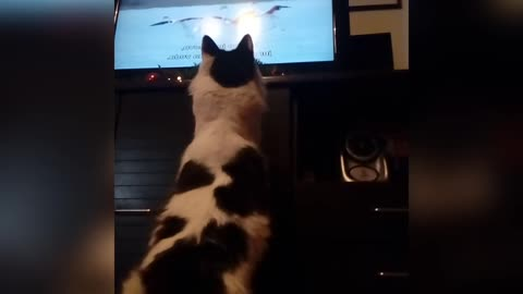 Cat watches animal documentary, tries to catch flamingos