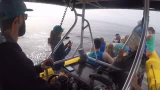 Close Encounter with a Humpback Whale in Maui