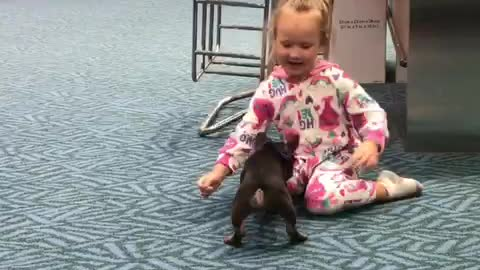 Puppy entertains little girl at airport