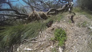 Birds Do It, Bees Do It, Even Three Snakes Do It - Video