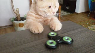 Cat Discovers New Favorite Toy - Video