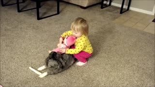 Toddler Makes Puppy Horsey - Video