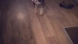 Puppy demanding food!  - Video