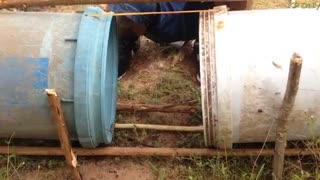 Amazing Quick Rabbit Trap Using Buckets  - Video
