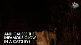 How Do Cats See The World - Video