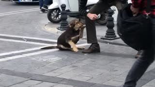 Man Gives Love to a Stray Dog