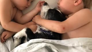 Siblings preciously nap with their rescue dog - Video