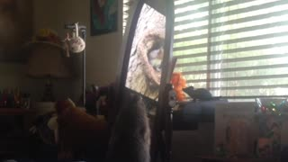 Prairie Dog watches viral video of squirrels through the mirror