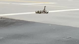 Officer Helping Duck Family Cross a Busy Road