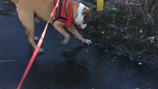 Brown dog red leash slides on icy road next to yellow truck