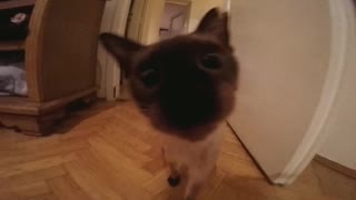 Cat VS camera  - Video