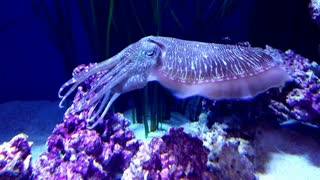 Mysterious Sea Creature - Video