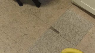 Black cat knocks banana off of counter - Video