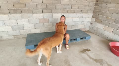 Strays of Alanya rescue dogs