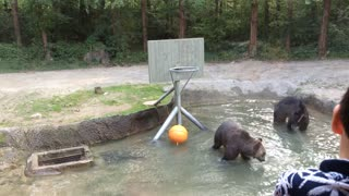 Bear Shoots Hoops - Video