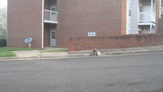 Charles Place Suites Cats