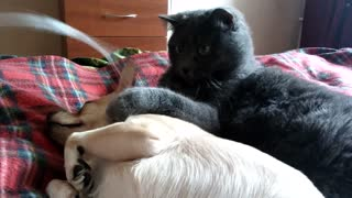 Dog, shocked because of behavior, cats  - Video